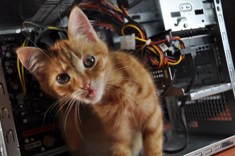 Un gato en un ordenador